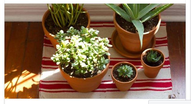 Mai tenere queste 5 piante in casa ecco quali sono - Piante da tenere in casa ...