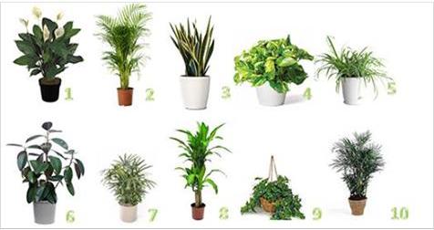 Ecco le 10 piante che purificano l 39 aria di casa e assorbono tutte le sostanze tossiche - Piante che purificano l aria in casa ...