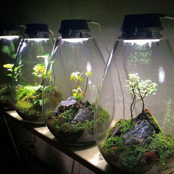 Come assemblare un giardino in miniatura e tanti esempi per prenderne spunto - Giardino in miniatura ...