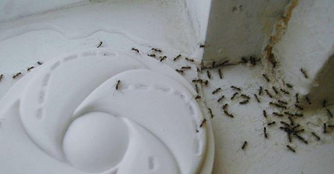 Come eliminare un 39 invasione di formiche in casa - Eliminare formiche in casa ...